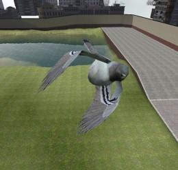 rabies-pigeon.zip For Garry's Mod Image 1
