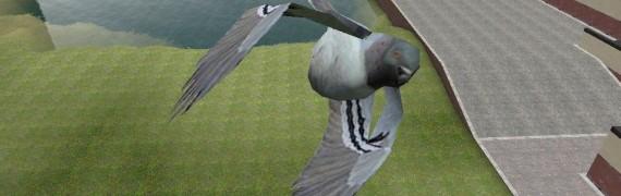 rabies-pigeon.zip
