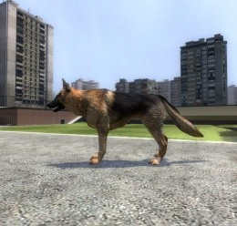 german_shepard.zip For Garry's Mod Image 1
