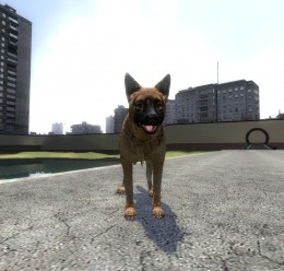 german_shepard.zip For Garry's Mod Image 2