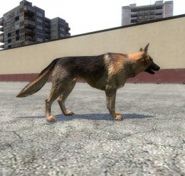 german_shepard.zip For Garry's Mod Image 3