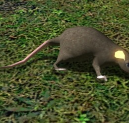 Rat (from HL2 leak) For Garry's Mod Image 1