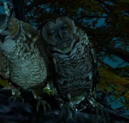 animatedowls.zip For Garry's Mod Image 1