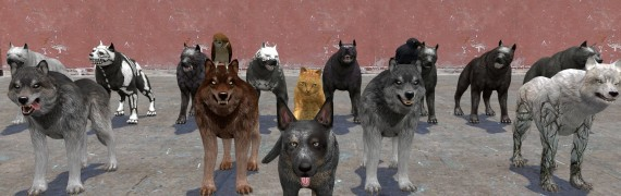 Animal Pack (Dragon Age)