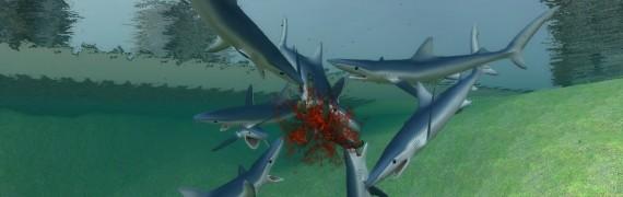 SharkPack