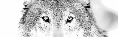 wolf_background.zip