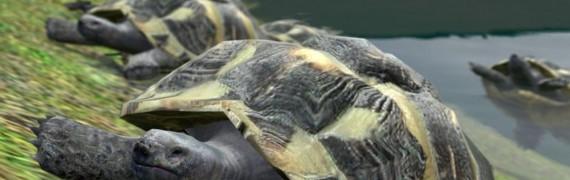 turtle.zip