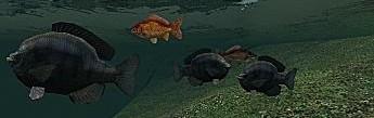 fish_ent.zip