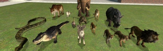 Animal SNPCs