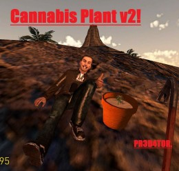 Updated Cannabis Plant- DarkRP For Garry's Mod Image 1