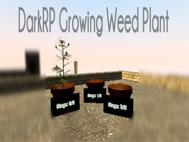 how to grow weed in dark rp