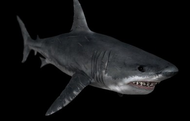 crysis_shark For Garry's Mod Image 1