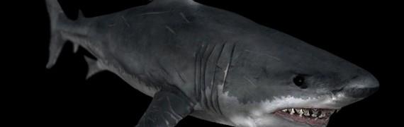 Crysis Shark